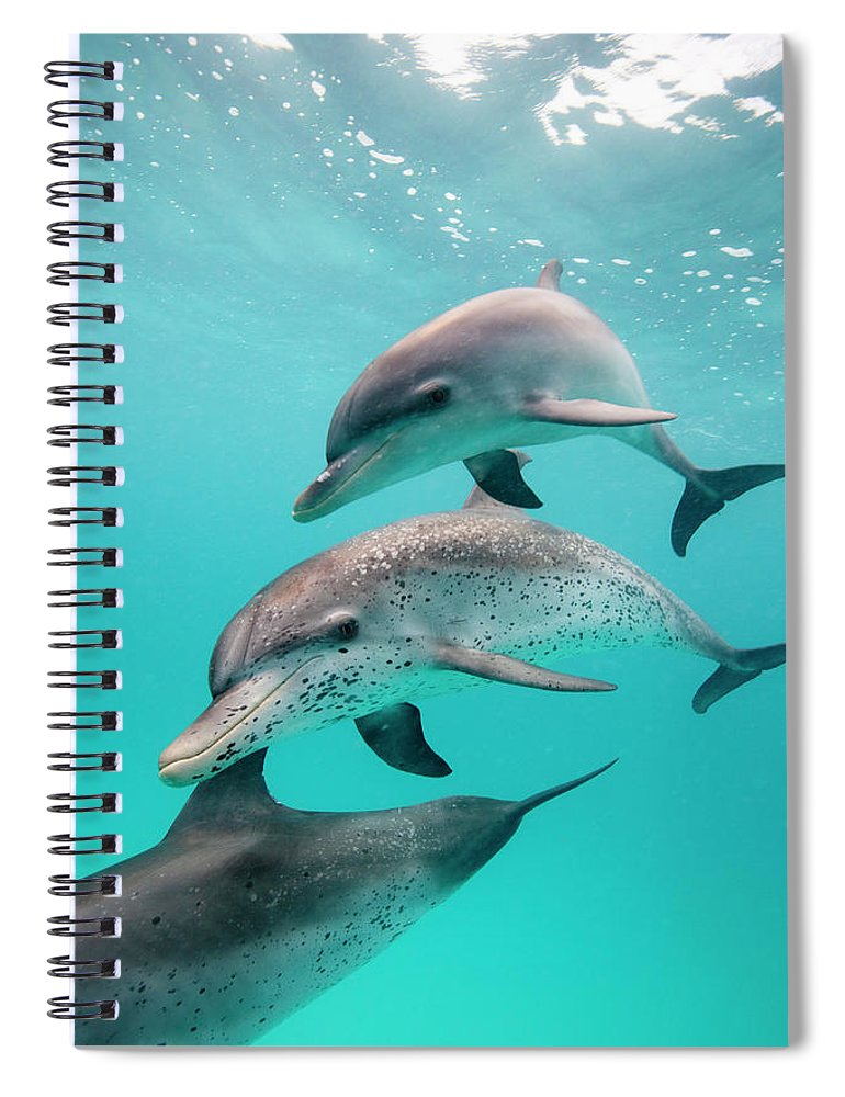 Underwater Spiral Notebook featuring the photograph Atlantic Spotted Dolphin Stenella by Stephen Frink