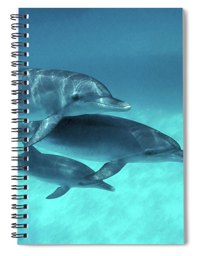 Animal Themes Spiral Notebook featuring the photograph Atlantic Spotted Dolphins Stenella by Georgette Douwma