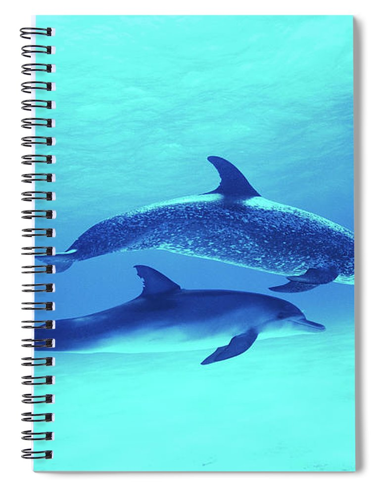 Underwater Spiral Notebook featuring the photograph Atlantic Spotted Dolphins Stenella by Rene Frederick