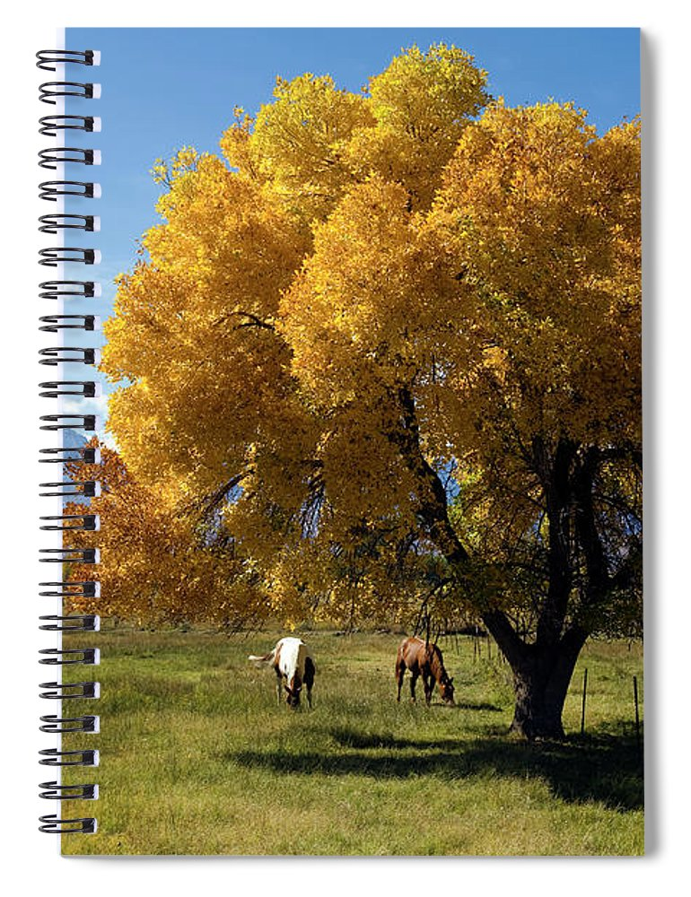 Horse Spiral Notebook featuring the photograph Autumn Horses by Kevinjeon00