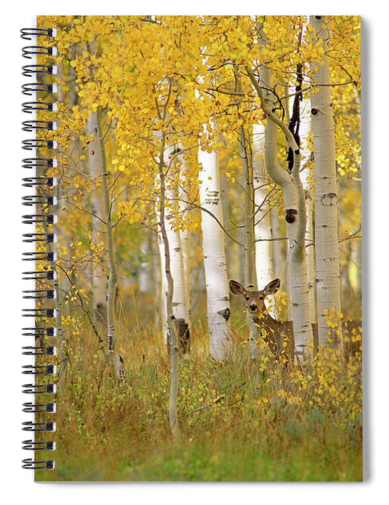 Vertebrate Spiral Notebook featuring the photograph Autumn In Uinta National Forest. A Deer by Mint Images - David Schultz