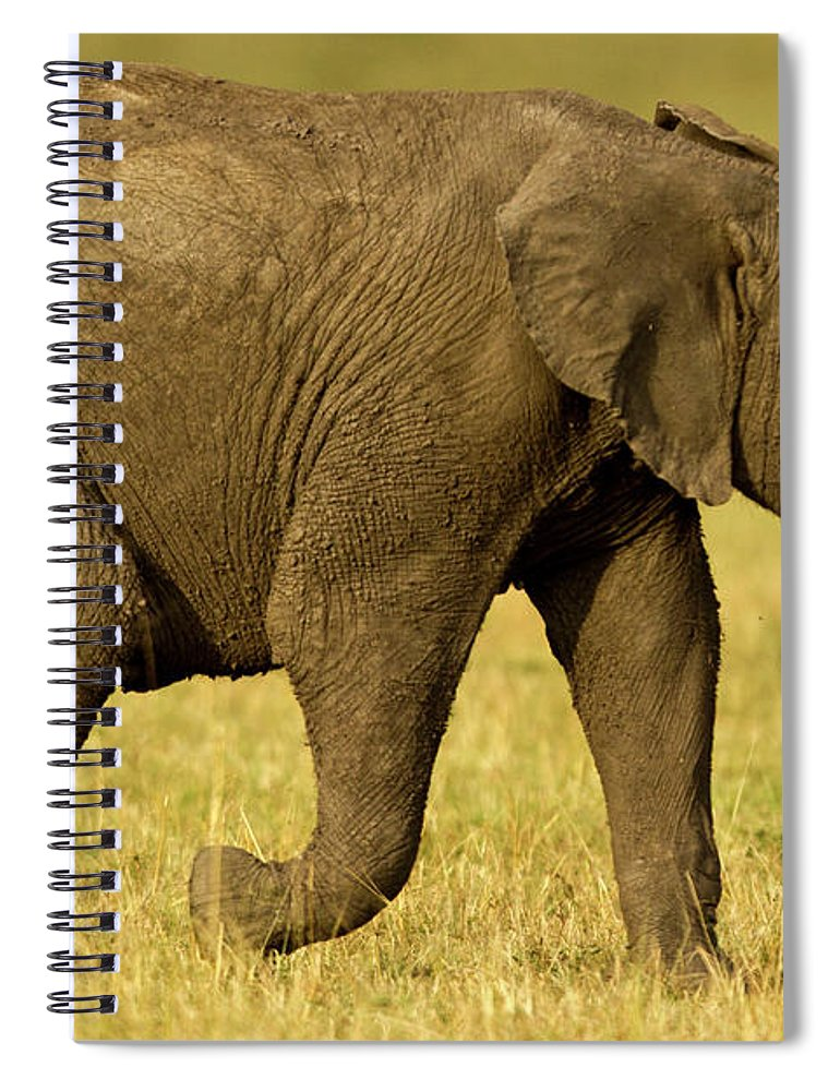 Following Spiral Notebook featuring the photograph Baby Elephant Following The Herd On The by Manoj Shah
