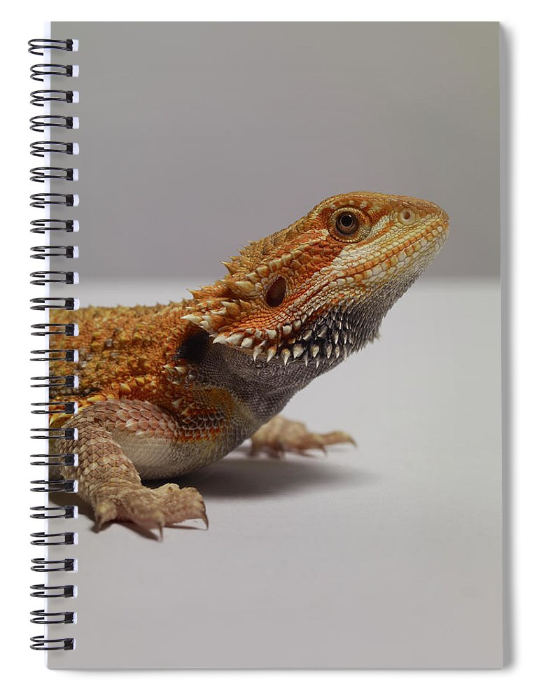 Alertness Spiral Notebook featuring the photograph Bearded Dragon by Dan Burn-forti