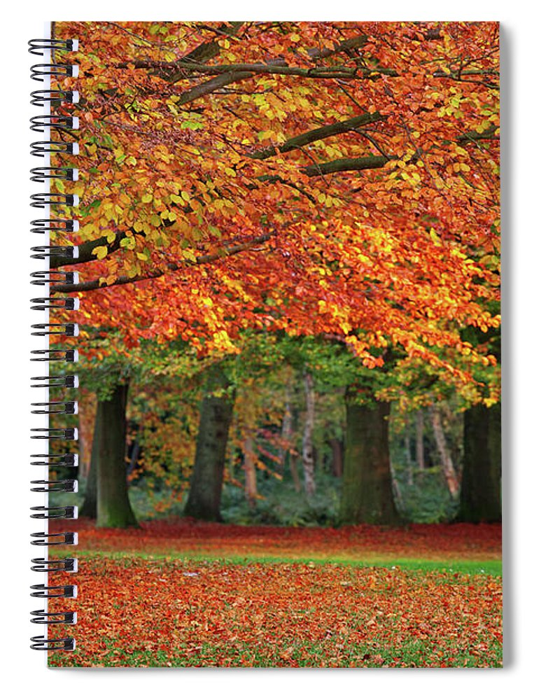 Orange Color Spiral Notebook featuring the photograph Beautiful Autumn In Park by Lorado