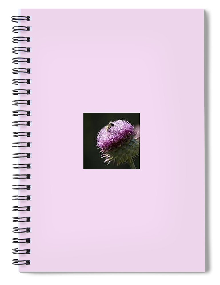 Bee Spiral Notebook featuring the photograph Bee On Thistle by Nancy Ayanna Wyatt