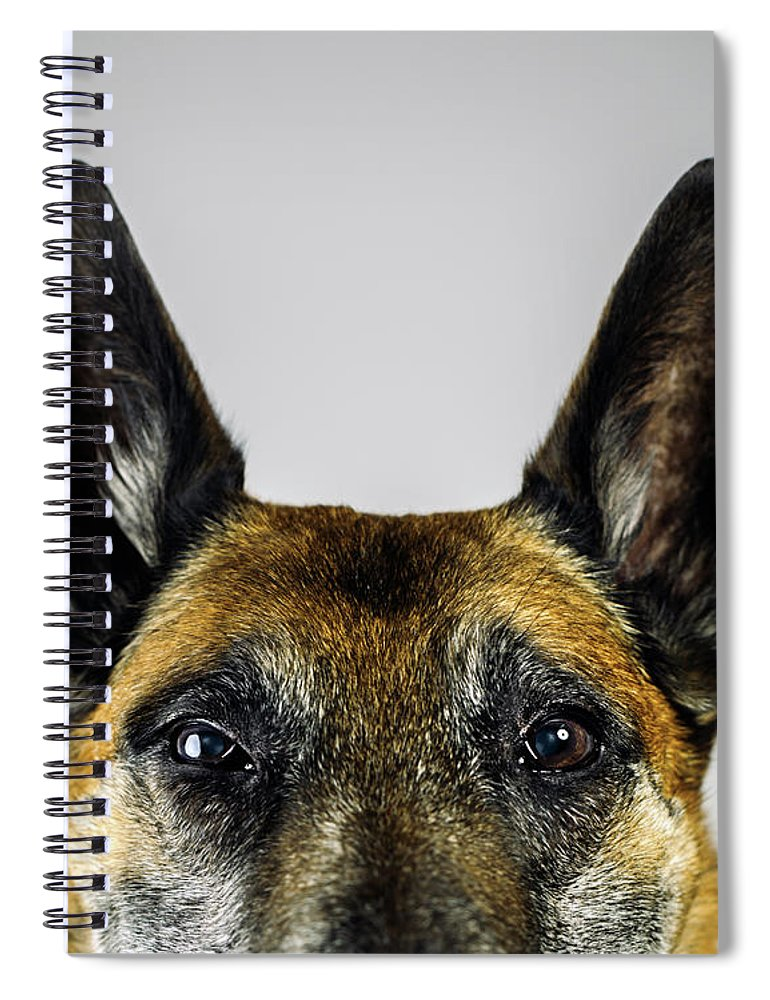 Pets Spiral Notebook featuring the photograph Belgian Sheperd Malinois Dog Looking At by Joan Vicent Cantó Roig