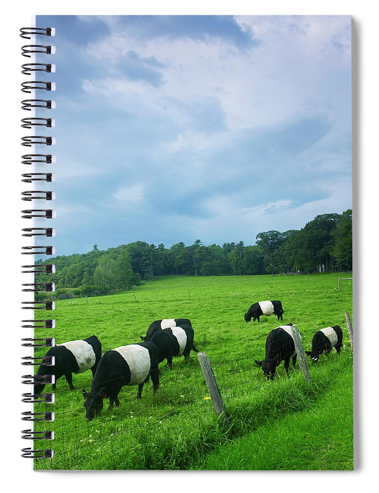 Scenics Spiral Notebook featuring the photograph Belted Galloways by John P Kelly
