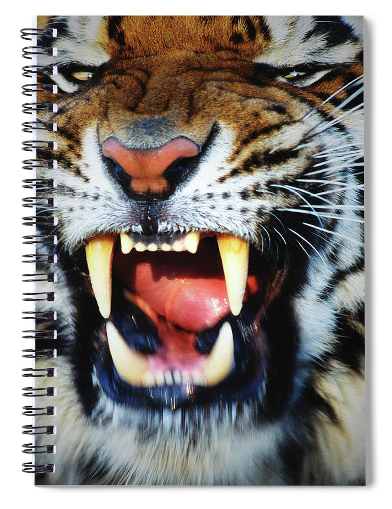 Snarling Spiral Notebook featuring the photograph Bengal Tiger Panthera Tigris Tigris by Mike Hill