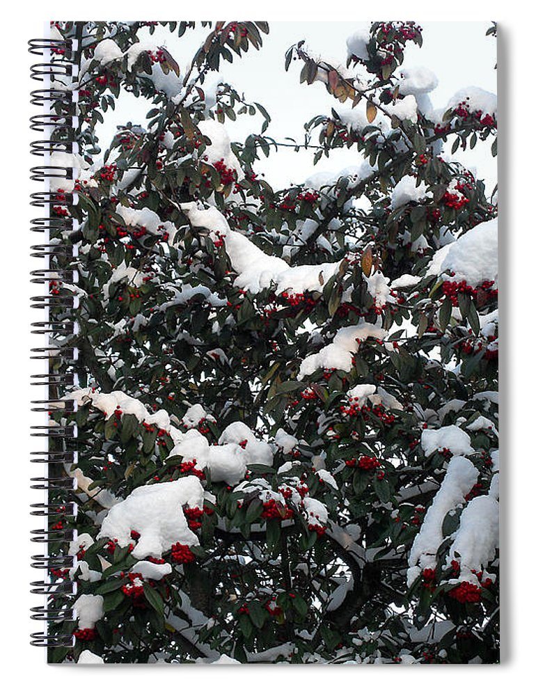 Christmas Spiral Notebook featuring the photograph Berries And Snow by Patrick J Murphy