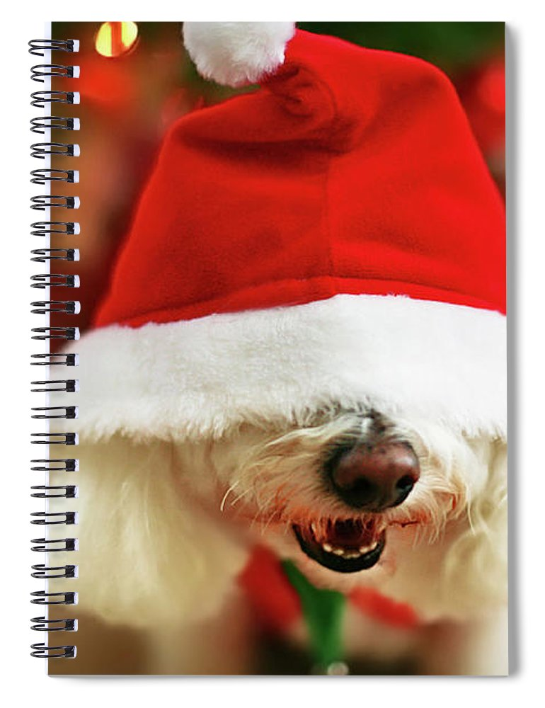 Pets Spiral Notebook featuring the photograph Bichon Frise Dog In Santa Hat At by Nicole Kucera