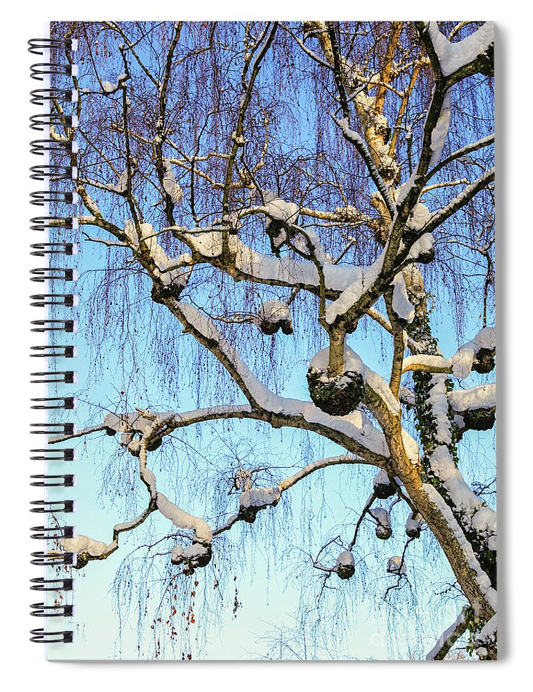 Birch Tree In Snow Spiral Notebook For Sale By Patricia