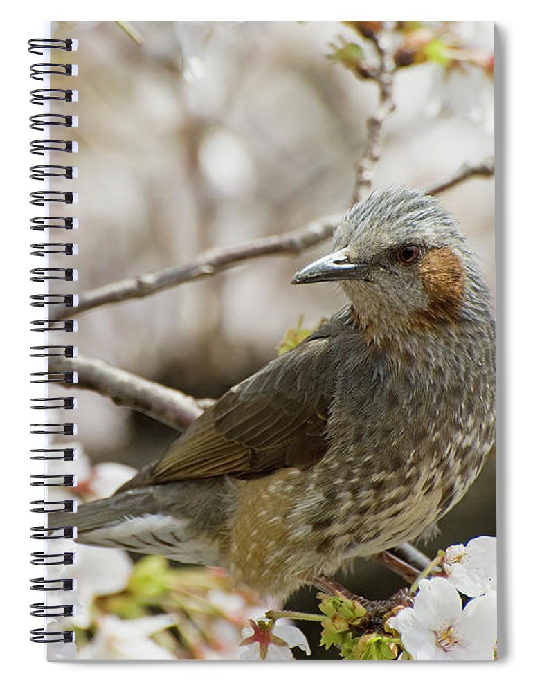 Alertness Spiral Notebook featuring the photograph Bird Perched Among Cherry Blossoms by Philippe Widling / Design Pics