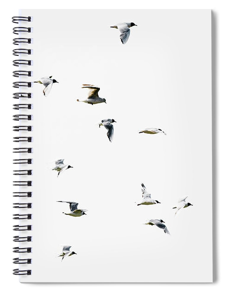 England Spiral Notebook featuring the photograph Birds In Flight by Magnusson, Roine