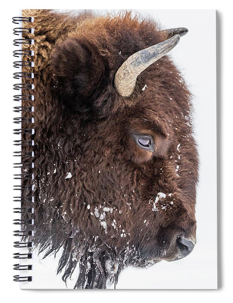 Vertebrate Spiral Notebook featuring the photograph Bison In Winter by Kencanning
