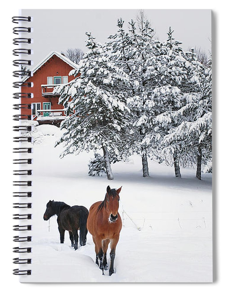 Horse Spiral Notebook featuring the photograph Black And Brown Horse by Anne Louise Macdonald Of Hug A Horse Farm