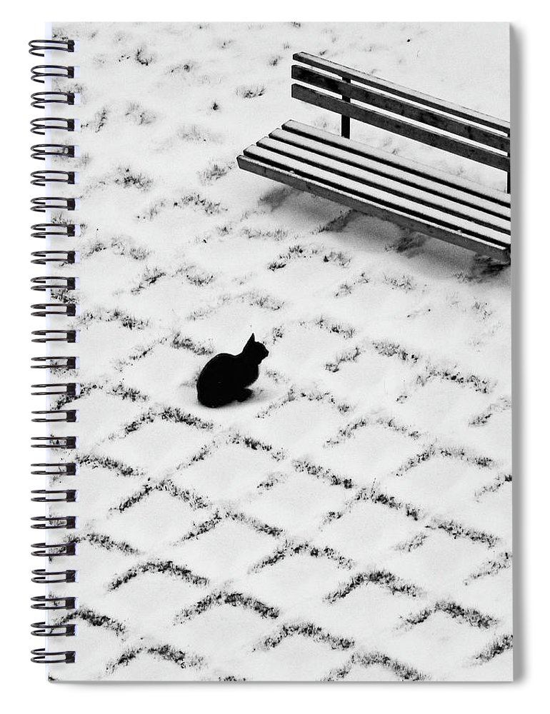 Pets Spiral Notebook featuring the photograph Black Cat Contemplating Bench by Photo By Marianna Armata