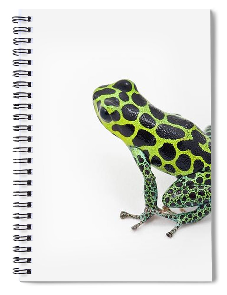 White Background Spiral Notebook featuring the photograph Black Spotted Green Poison Dart Frog by Design Pics / Corey Hochachka