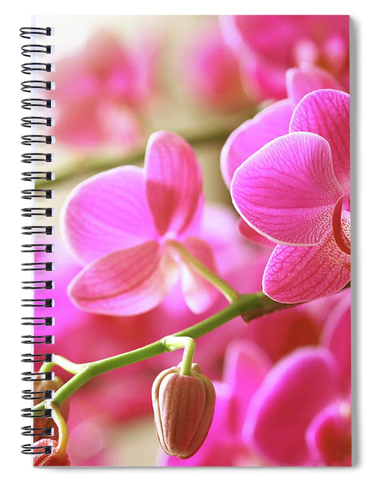 Environmental Conservation Spiral Notebook featuring the photograph Blooming Pink Orchid On A Green Branch by Dreaming2004