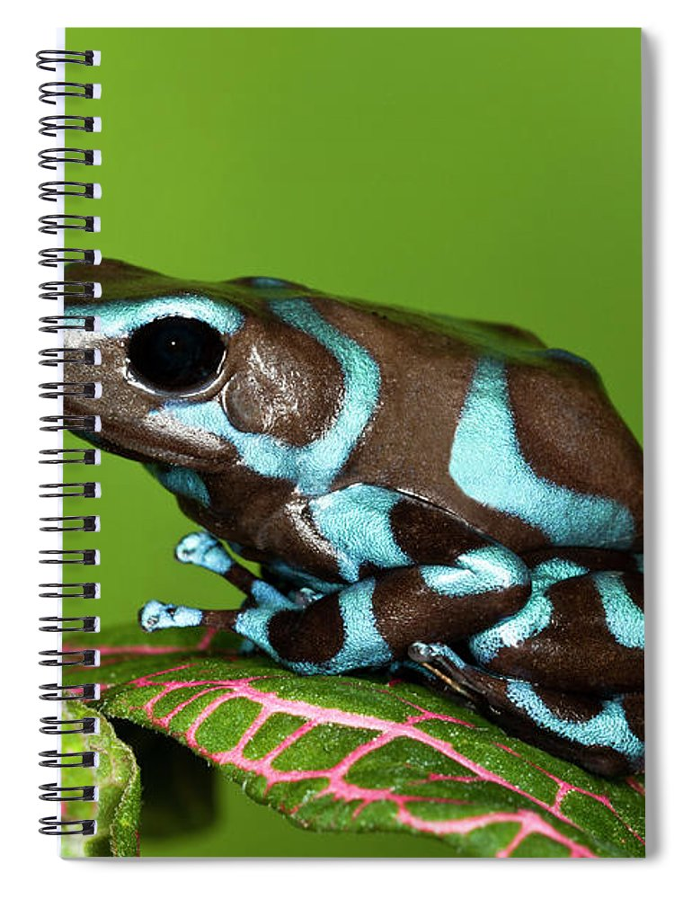 Animal Themes Spiral Notebook featuring the photograph Blue And Black Dart Frog, Dendrobates by Adam Jones