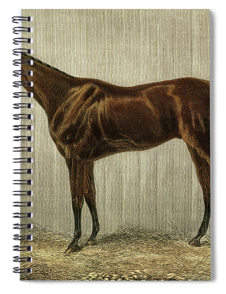 Professional Spiral Notebook featuring the painting Blue Crown by Unknown