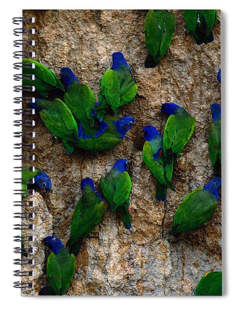 Blue Headed Parrot Spiral Notebook featuring the photograph Blue-headed And Barrabands Parrots by Art Wolfe