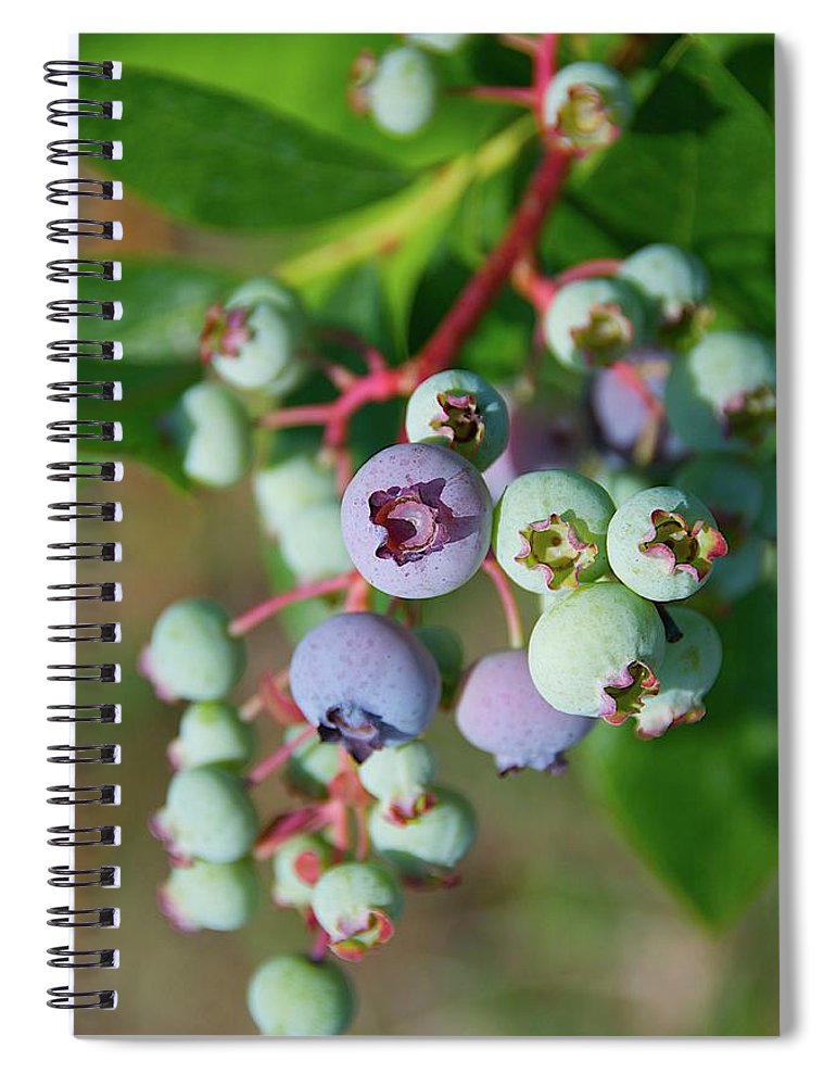 Large Group Of Objects Spiral Notebook featuring the photograph Blueberries by ©howd, Howard Lau