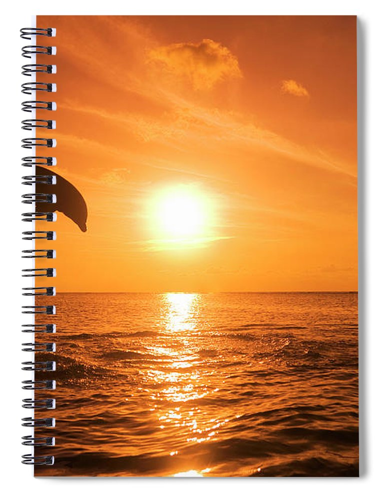 Orange Color Spiral Notebook featuring the photograph Bottlenose Dolphin Tursiops Truncatus by Rene Frederick