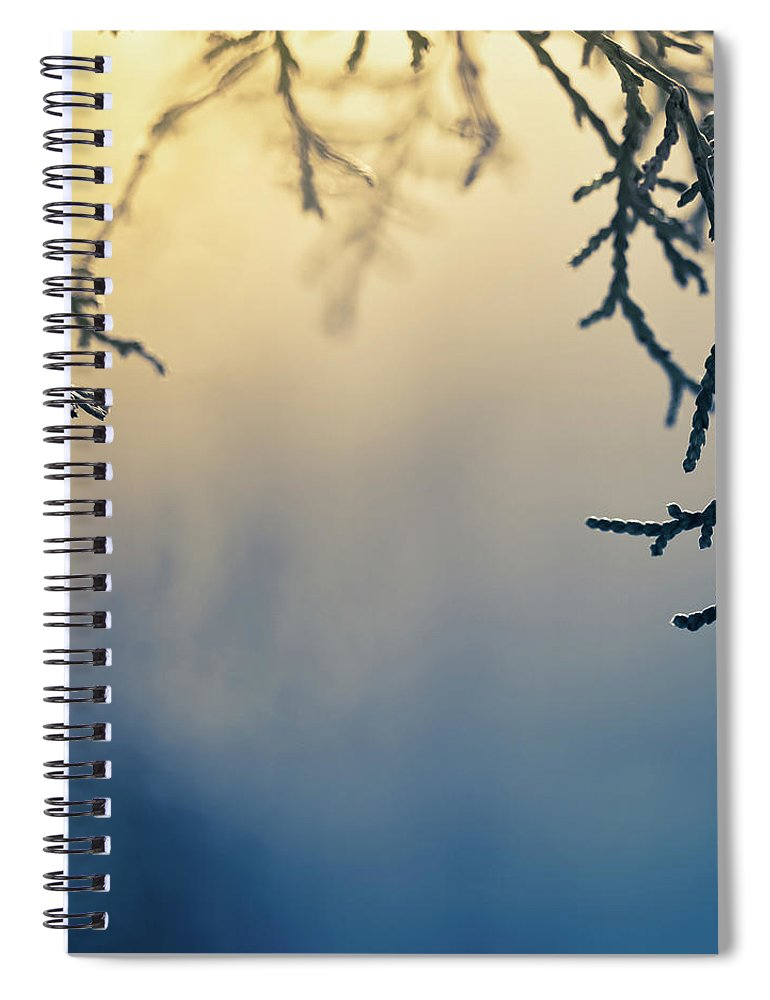 Saturated Color Spiral Notebook featuring the photograph Branch Of Pine Tree by Jeja
