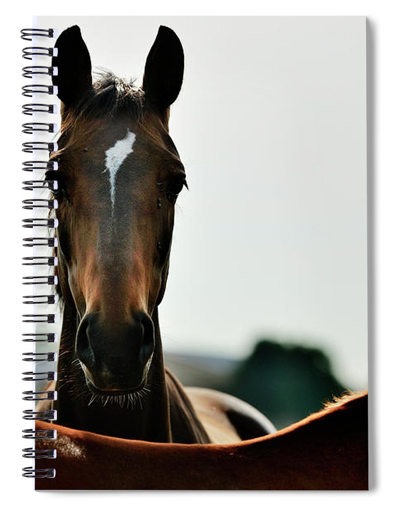 Horse Spiral Notebook featuring the photograph Brown Horse Back Lit by Akrp