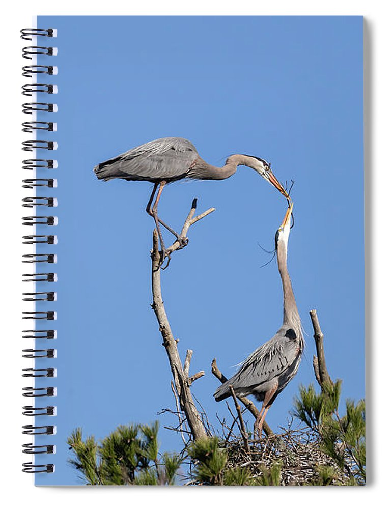 Great Blue Herons Spiral Notebook featuring the photograph Building For Future Generations 2019-1 by Thomas Young