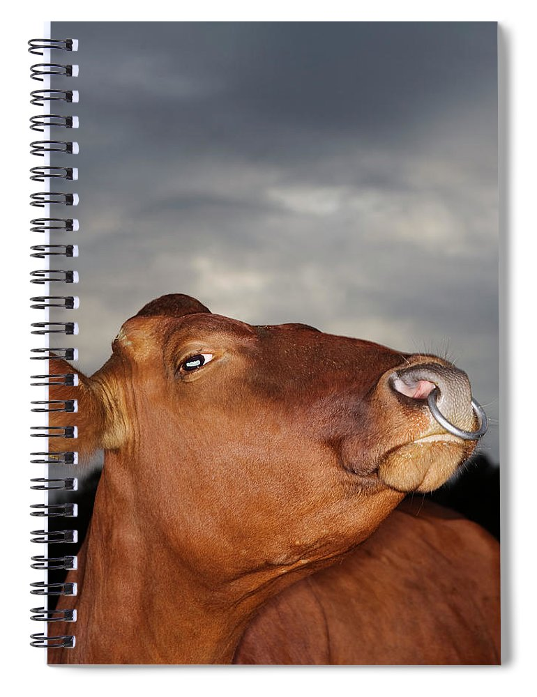 Sweden Spiral Notebook featuring the photograph Bull In Evening Light by Roine Magnusson