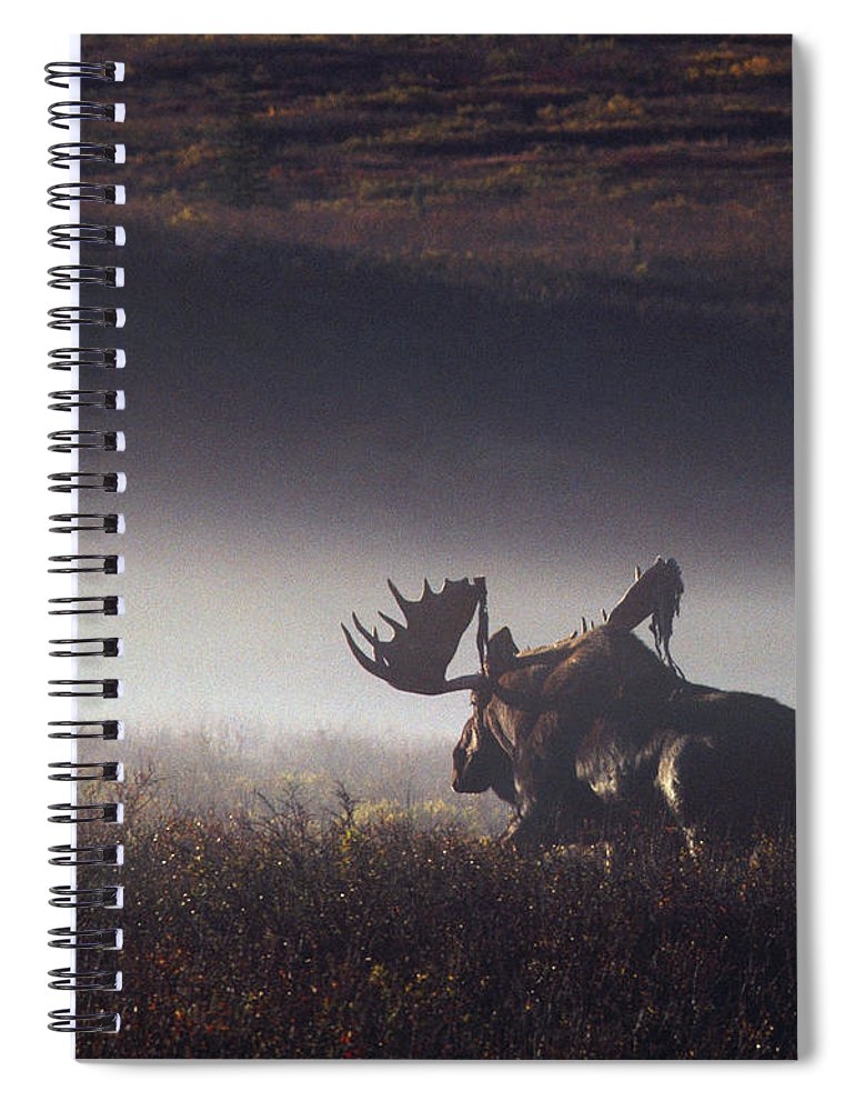Majestic Spiral Notebook featuring the photograph Bull Moose Alces Alces Walking Through by Johnny Johnson