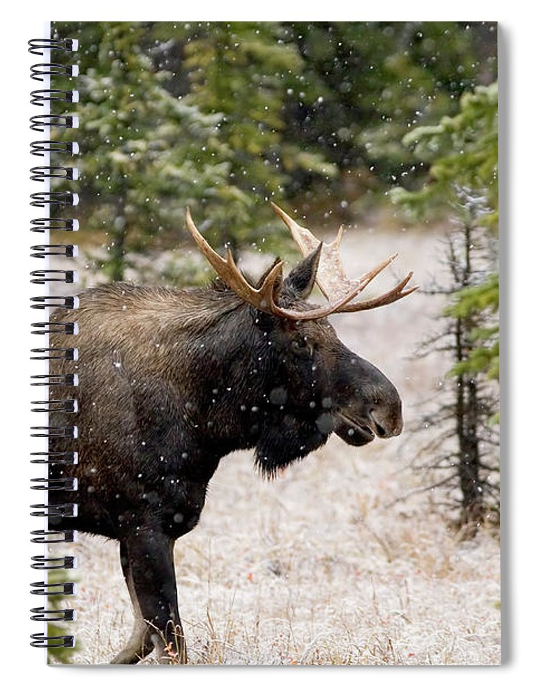Horned Spiral Notebook featuring the photograph Bull Moose In Snow Fall by Tulissidesign