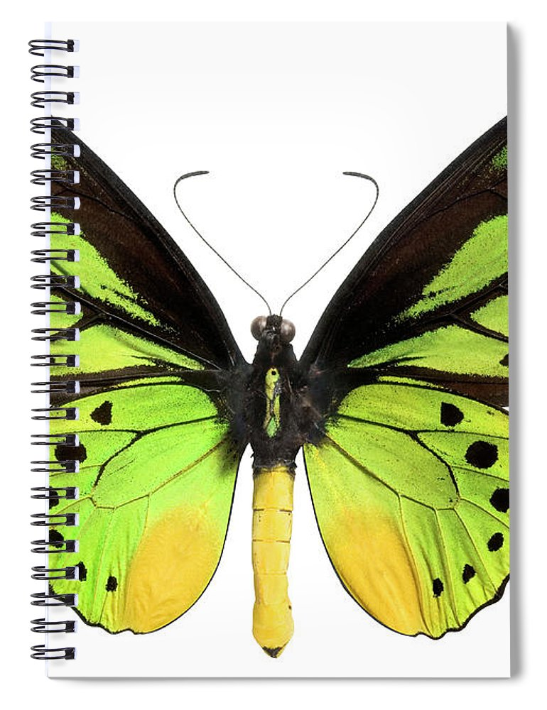 White Background Spiral Notebook featuring the photograph Butterfly Lepidoptera With Green, Black by Flamingpumpkin