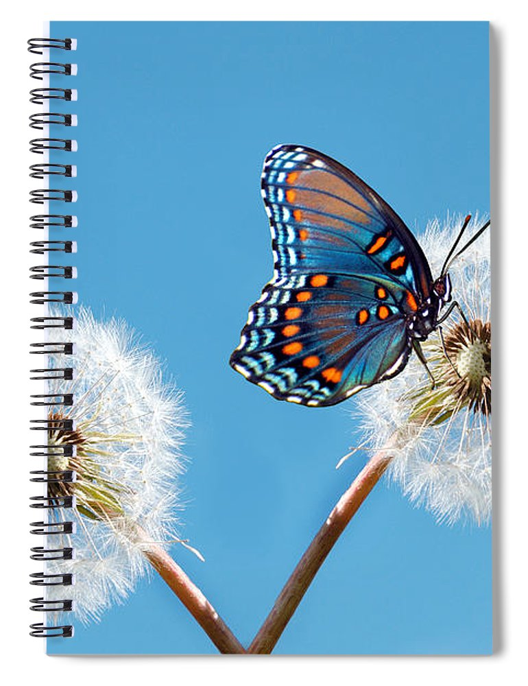 Animal Themes Spiral Notebook featuring the photograph Butterfly On Dandelion by Maria Wachala