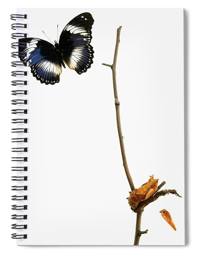 White Background Spiral Notebook featuring the photograph Butterfly Transformation by David Arky