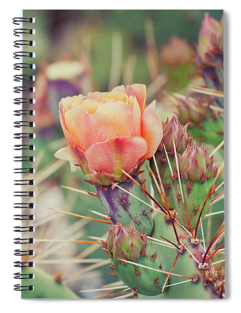 Orange Color Spiral Notebook featuring the photograph Cactus Blossom by Harpazo hope