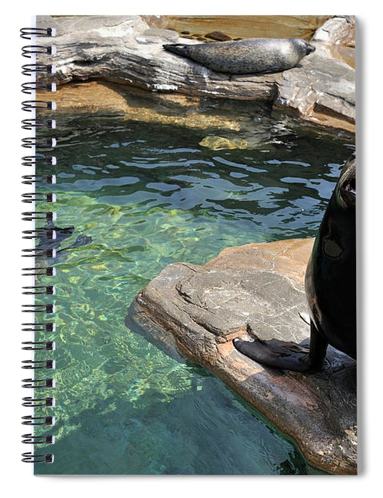 Sea Lion Spiral Notebook featuring the photograph California Sea Lion And Spotted Seal by T. Nakamura Volvox Inc.