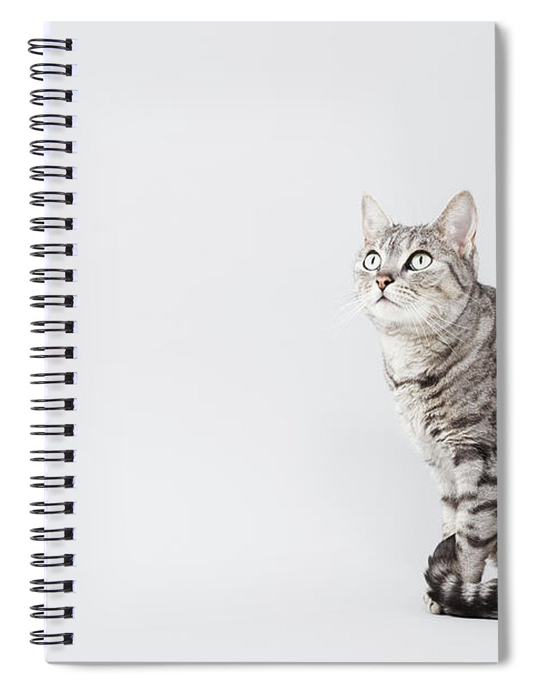Pets Spiral Notebook featuring the photograph Cat Looking Up by Lisa Stirling