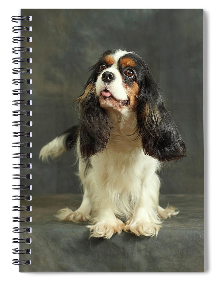 Pets Spiral Notebook featuring the photograph Cavalier King Charles Spaniel by Sergey Ryumin