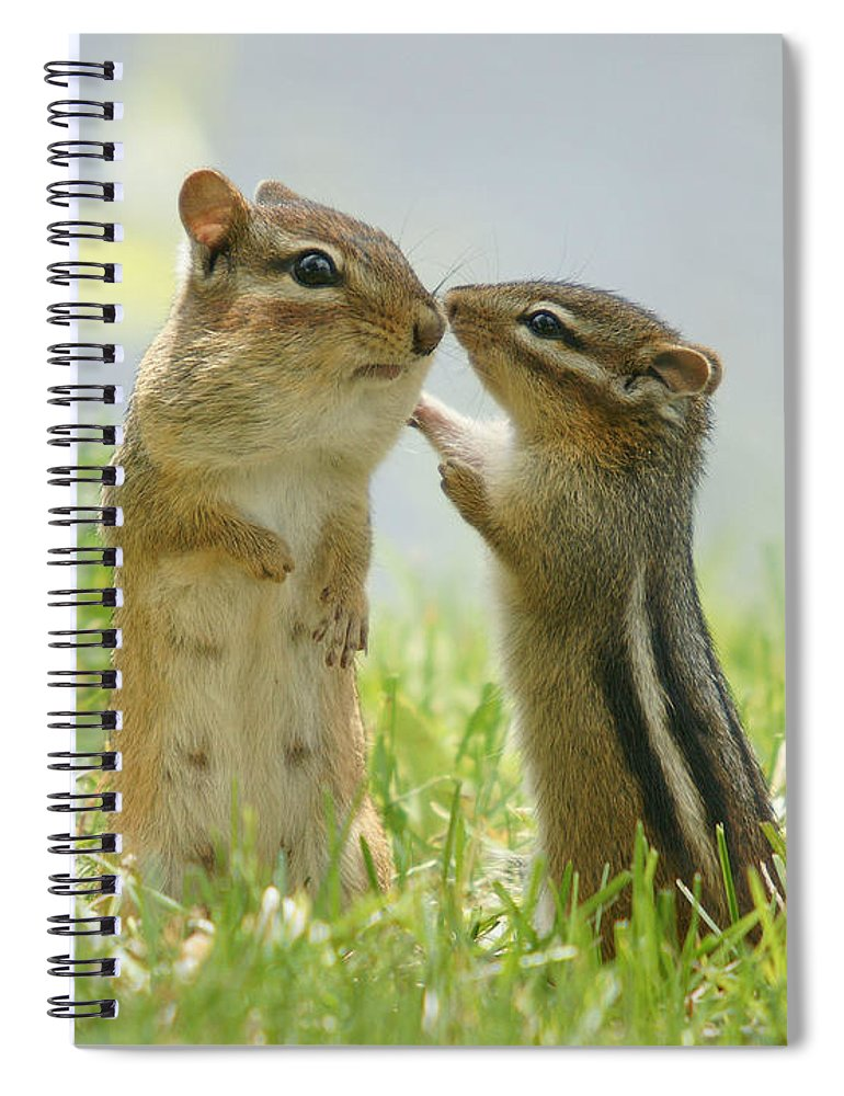 Grass Spiral Notebook featuring the photograph Chipmunks In Grasses by Corinne Lamontagne