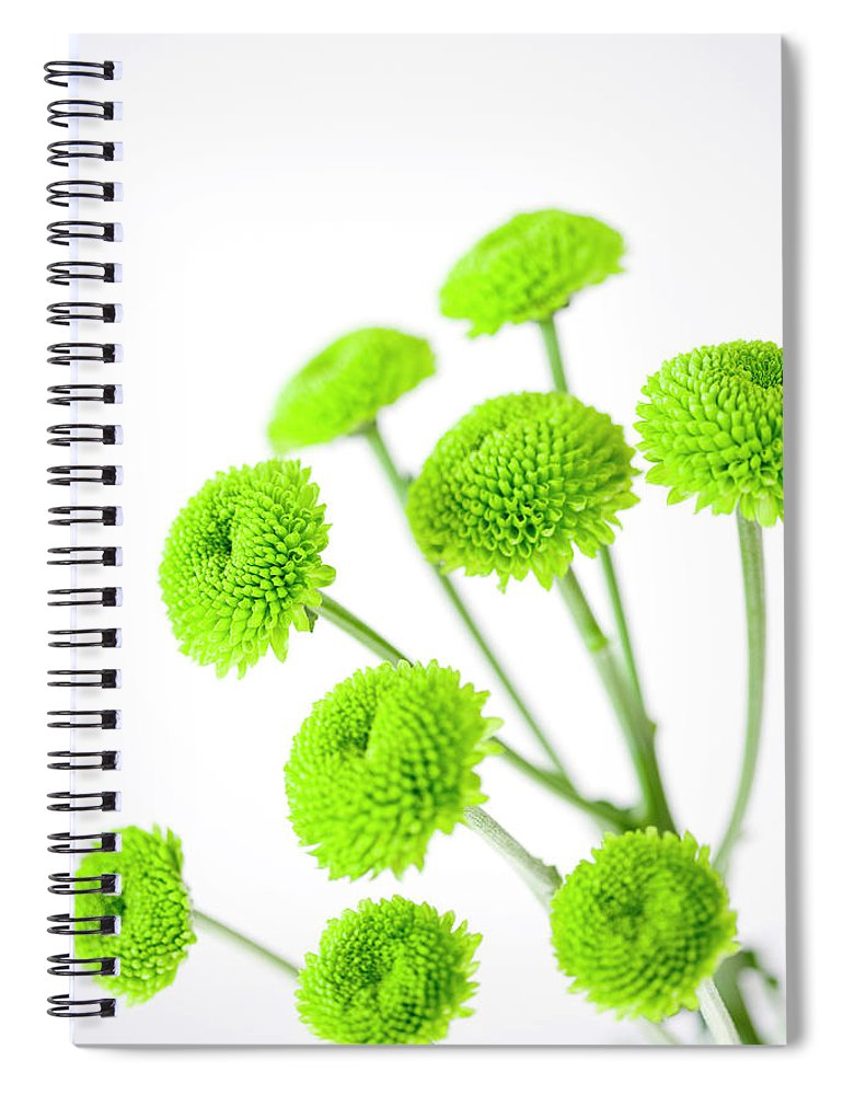 White Background Spiral Notebook featuring the photograph Chrysanthemum Flowers by Nicholas Rigg