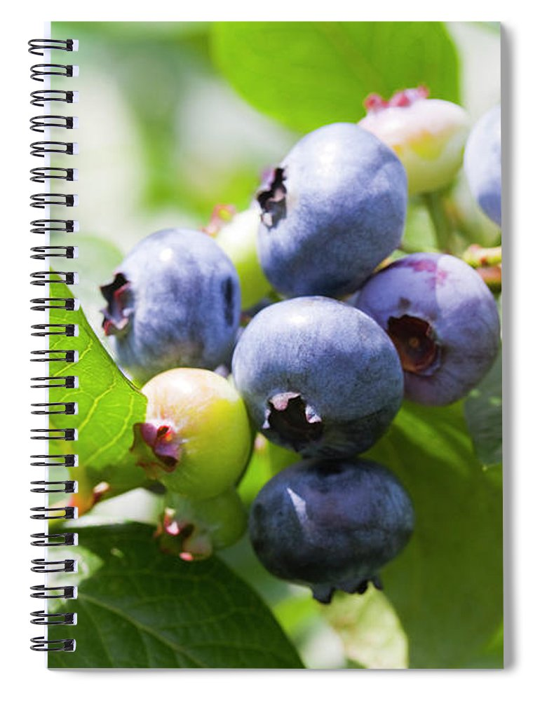 Yamanashi Prefecture Spiral Notebook featuring the photograph Close-up Of Blueberry Plant And Berries by Daisuke Morita