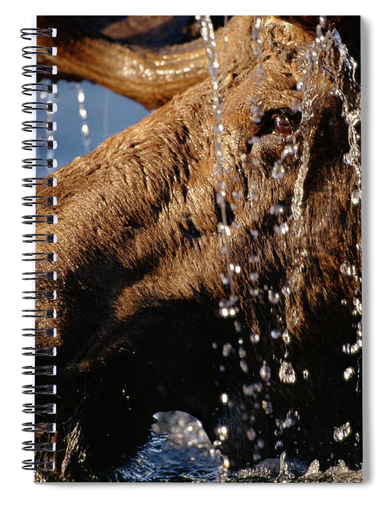 Male Animal Spiral Notebook featuring the photograph Close-up Of Bull Moose Alces Alces With by Eastcott Momatiuk