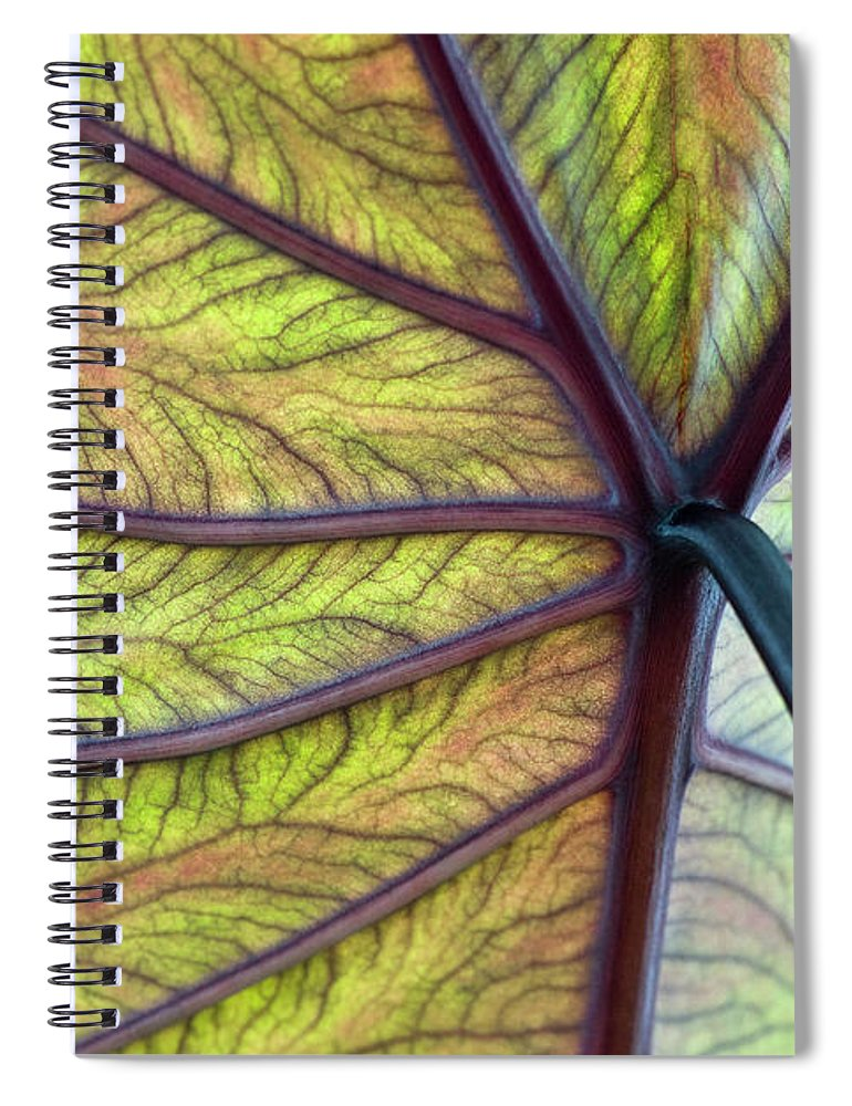 Voodoo Doll Spiral Notebook featuring the photograph Close Up Of Colocasia Esculenta Leaf by Deb Casso