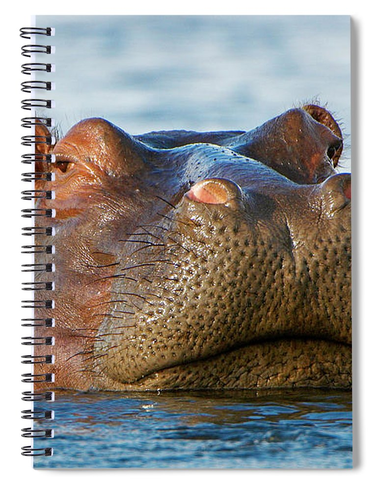 Head Above Water Spiral Notebook featuring the photograph Close Up Of Hippo Hippopotamus by Shem Compion