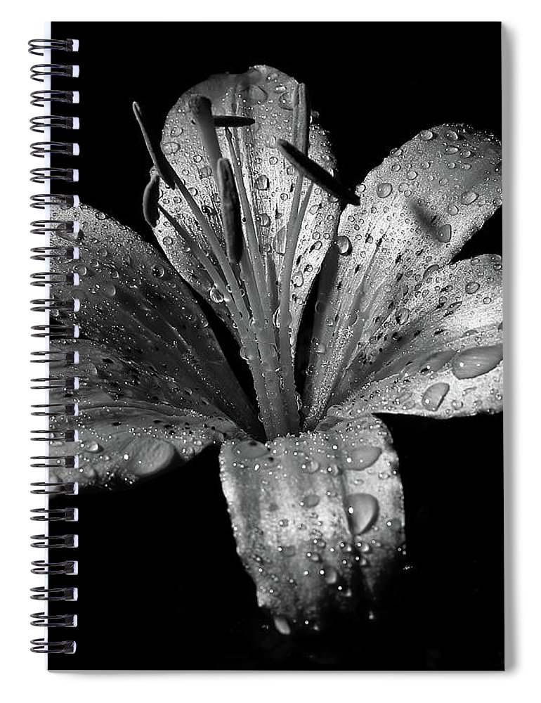Black Background Spiral Notebook featuring the photograph Collection by Photograph By Ryan Brady-toomey