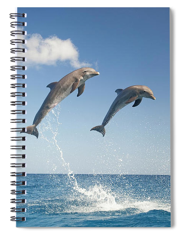 Aerodynamic Spiral Notebook featuring the photograph Common Bottlenose Dolphins Tursiops by Mike Hill