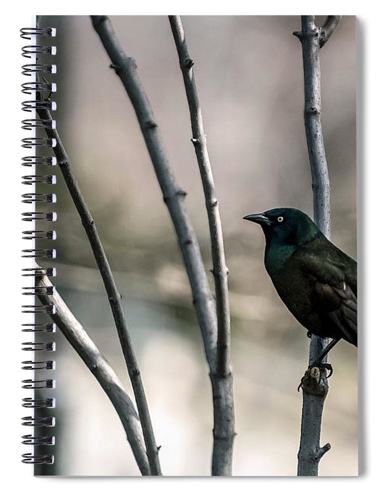 Animal Themes Spiral Notebook featuring the photograph Common Grackle by By Ken Ilio