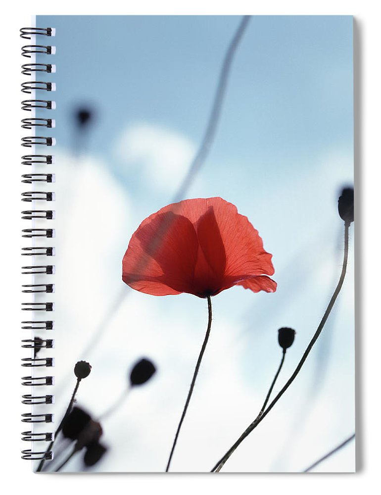 Outdoors Spiral Notebook featuring the photograph Common Poppy Papaver Rhoeas, Close Up by Dougal Waters